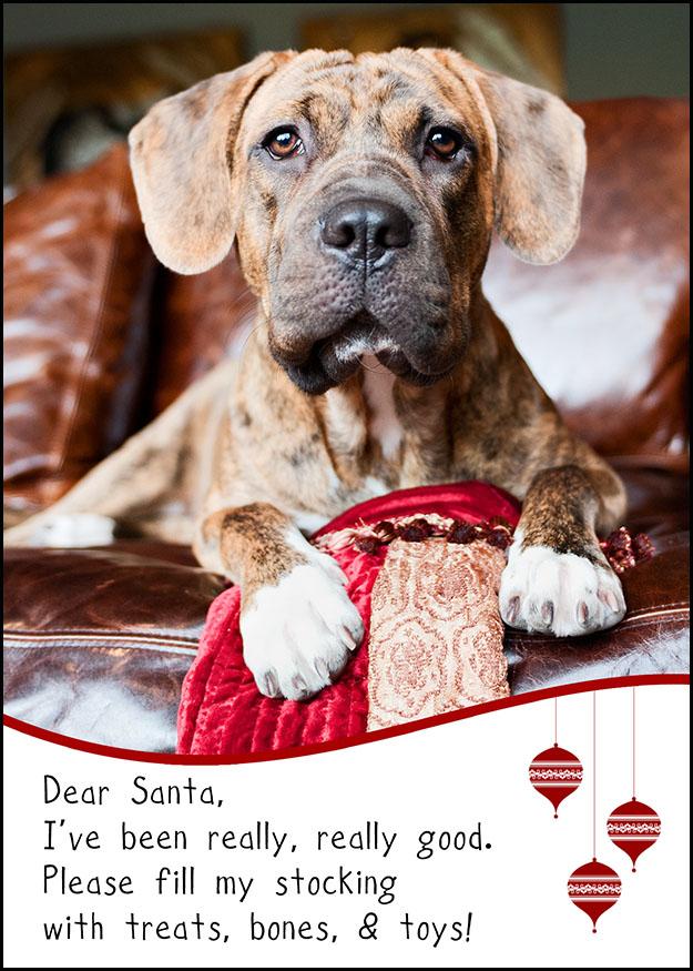 if - Humane Society Christmas Cards
